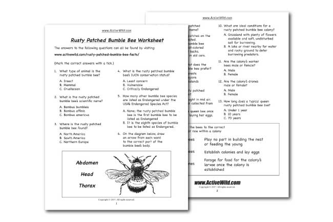 Rusty Patched Bumble Bee Worksheet