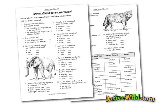 Animal Families Worksheets : Free printable worksheets for teachers parents