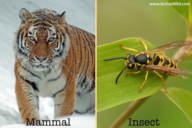 Mammal Insect Comparison