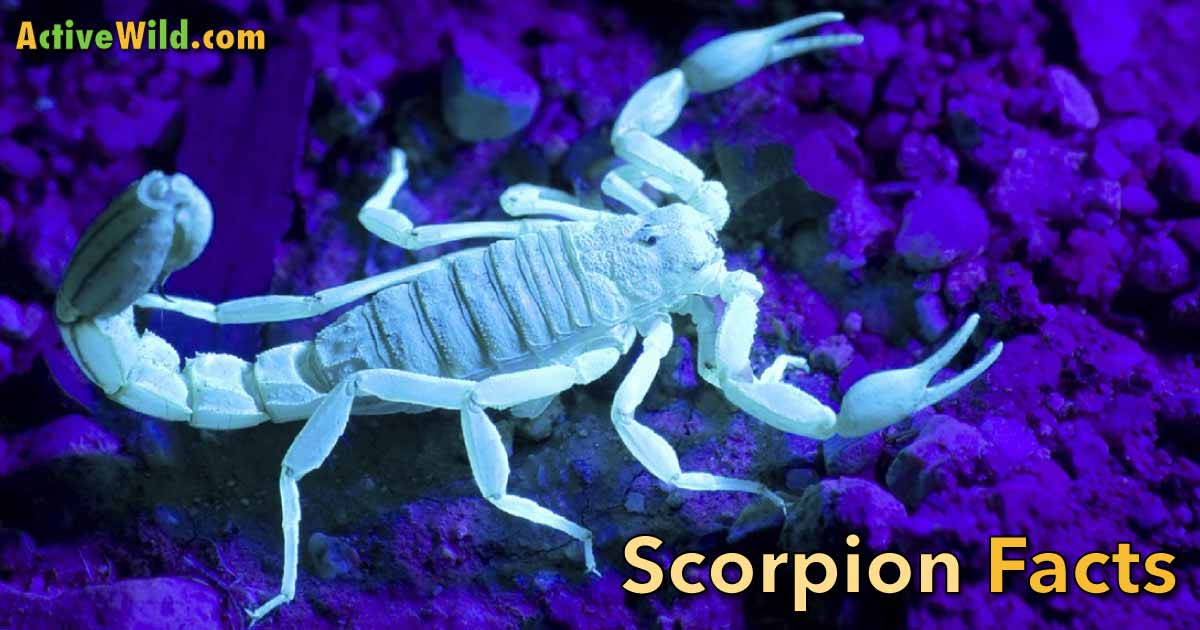 Learn About Scorpions: Scorpion Facts for Kids, Students