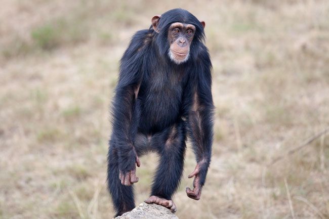 mammals list