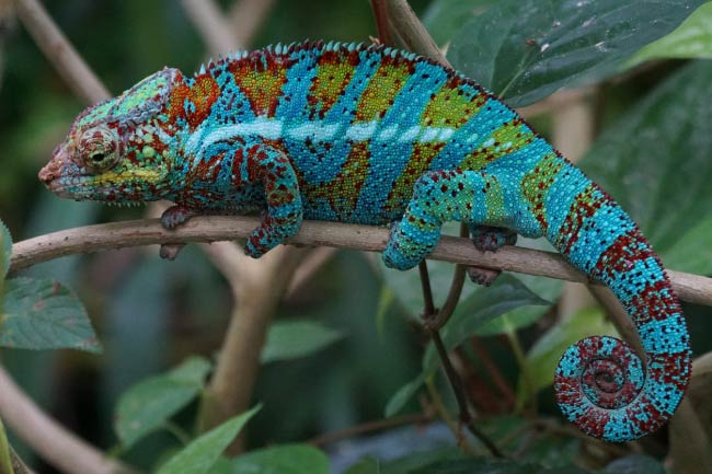 List of rainforest reptiles Introduction