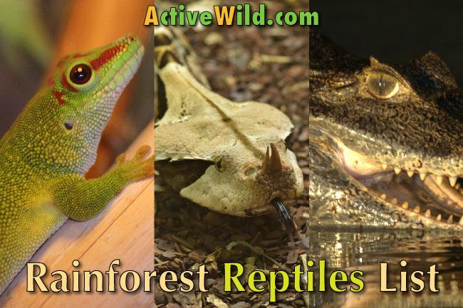 Rainforest Reptiles List