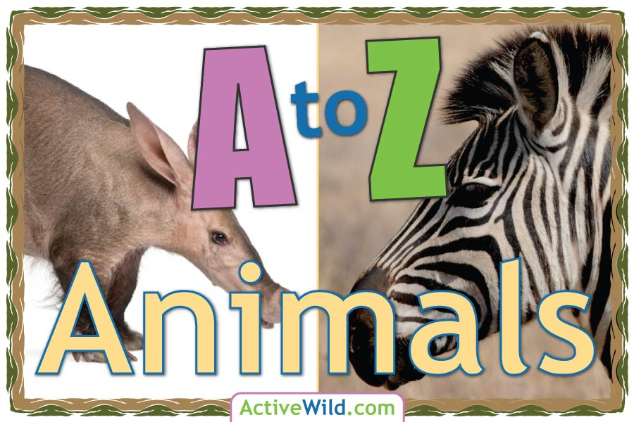 A to Z Animals List For Kids With Pictures & Facts  Animal a-z
