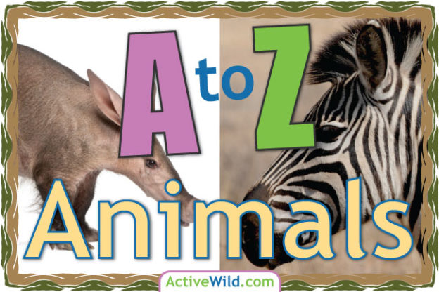 A To Z Animals List For Kids With Pictures & Facts. Animal