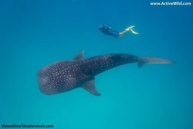 biggest fish in the world