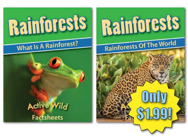 rainforest worksheets download