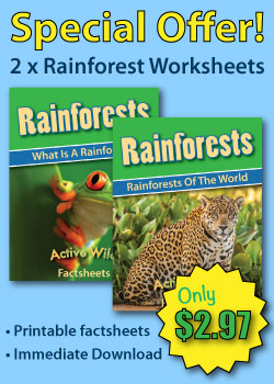 Rainforest Worksheets Sidebar Ad