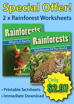 Rainforest Worksheets Sidebar Ad