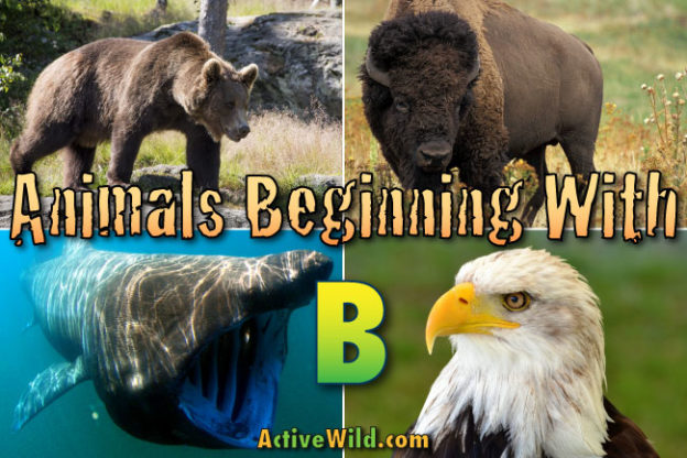 animals that start with b