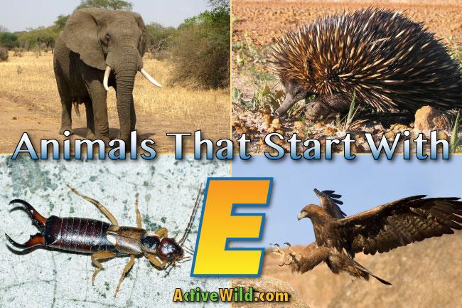animals start beginning wild facts activewild