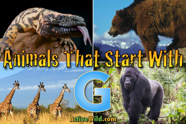 animals that start with g
