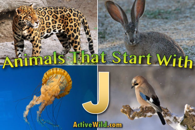 animals that start with j