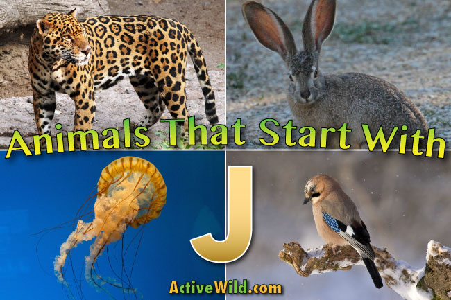 Animals That Start With H For Kids