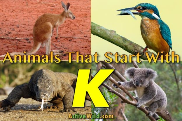animals that start with k