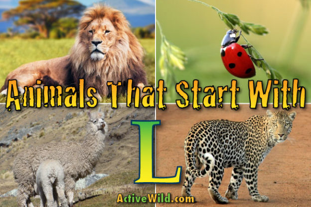animals that start with l