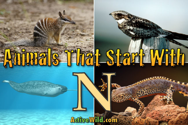 animals that start with n