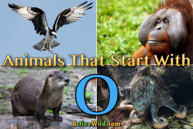 Animal Names Beginning With Letter I