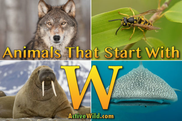 animals that start with w
