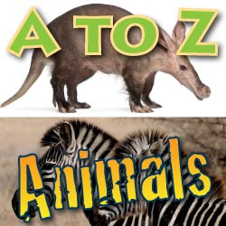 A to Z Animals Page Link ad