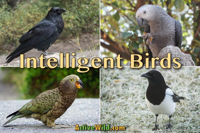 Intelligent Birds List