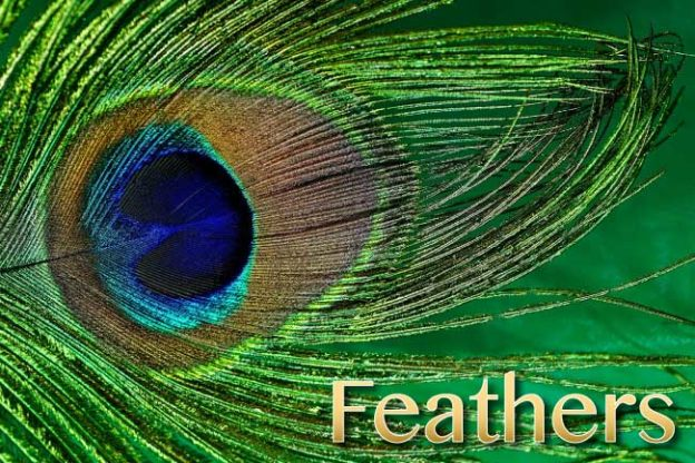 bird feather facts