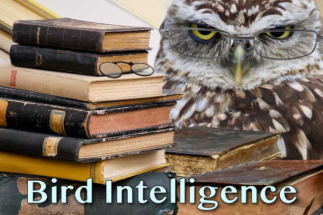 bird intelligence how intelligent are birds