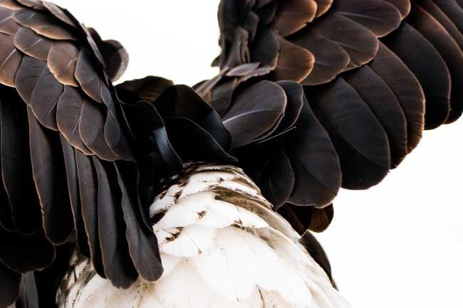 contour feathers