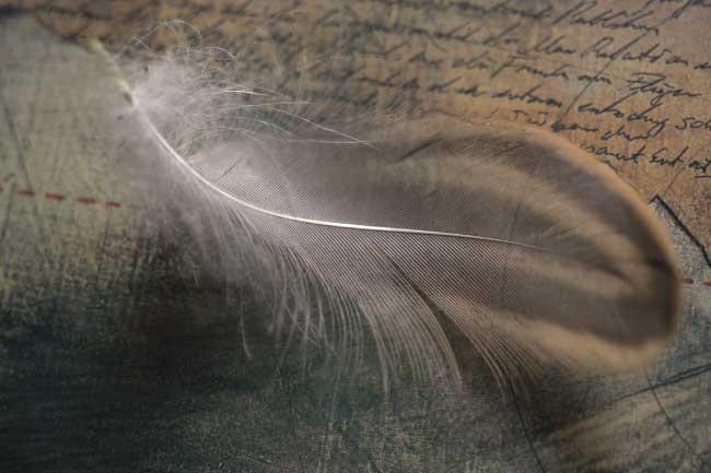 feather barbs