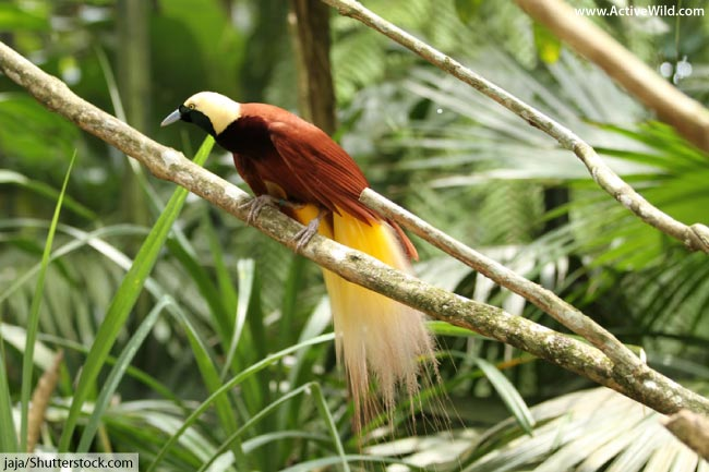 Amazing Birds List With Pictures & Facts: The Incredible
