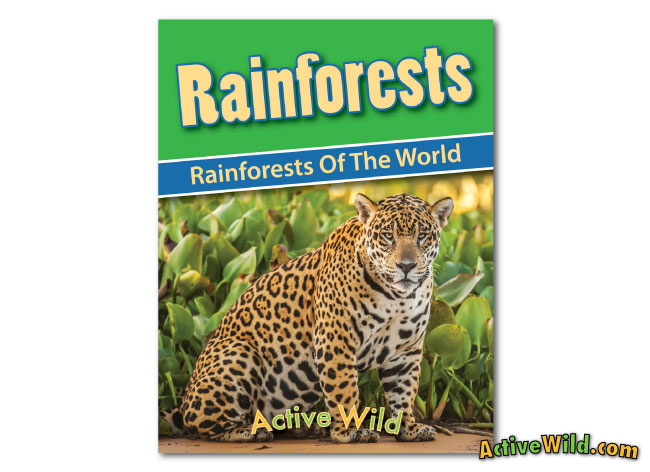 printable-rainforest workbook rainforests of the world