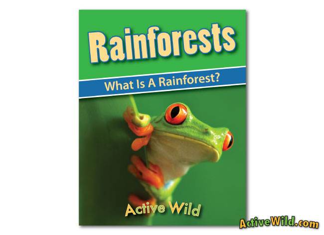 printable rainforest workbook cover what is a rainforest