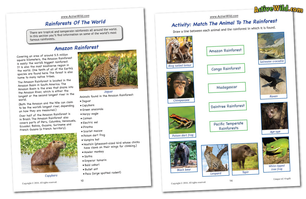 graphic about Layers of the Rainforest Printable identify Rainforest Workbooks Toward Down load Print: Printable PDF eBooks