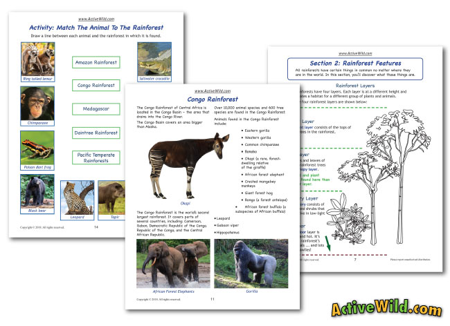 rainforest printable workbooks