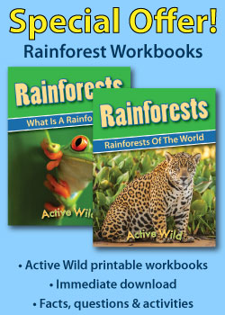 Printable Rainforest PDF Workbooks Sidebar Ad