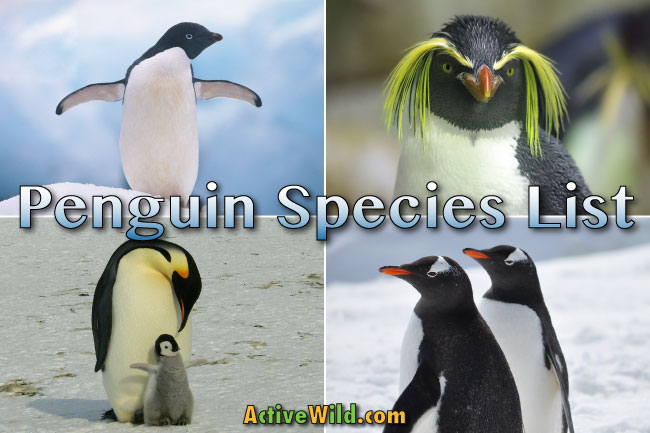 types penguins