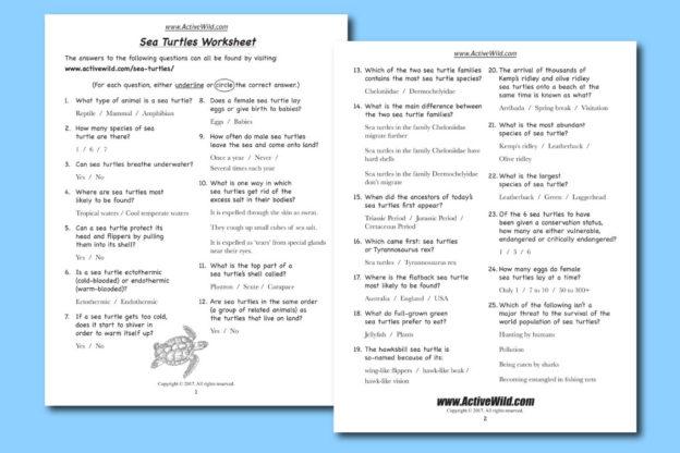 FREE Sea Turtles Worksheet PDF Download Turtle Coloring Sheet