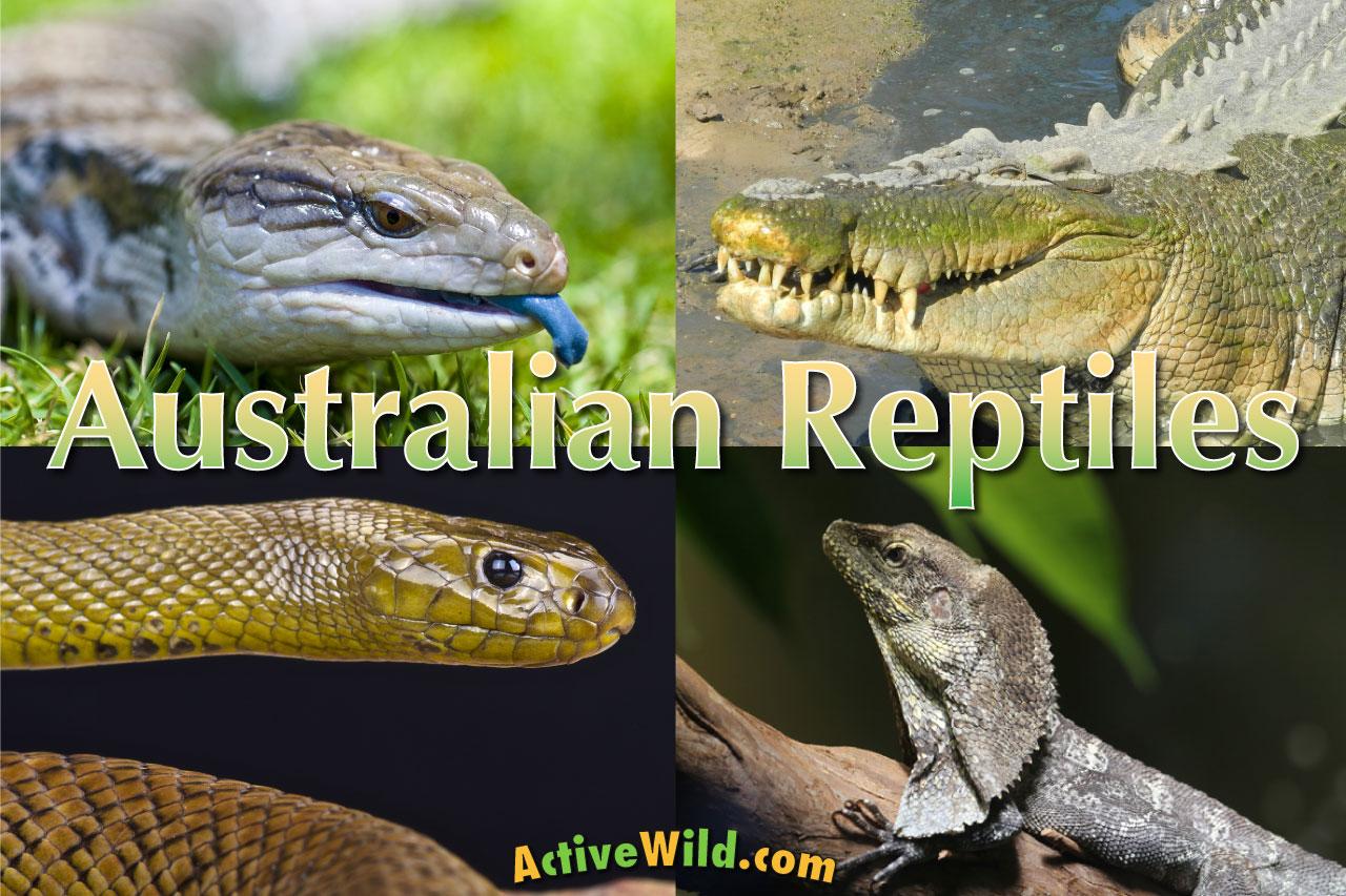 Australian reptiles list