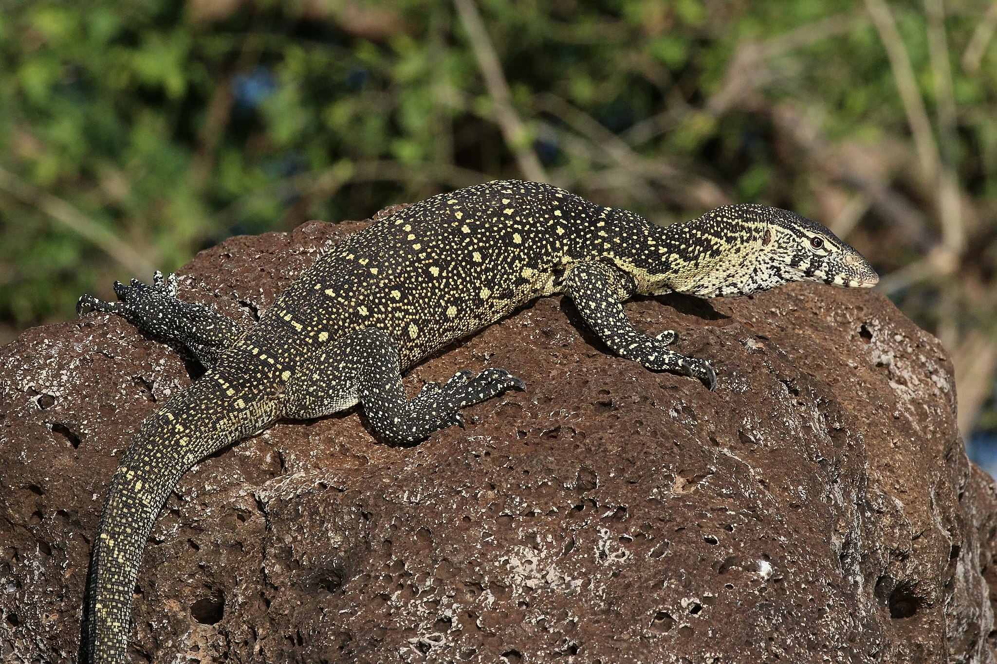 African Reptiles List, Pictures & Facts: Amazing Reptiles ...