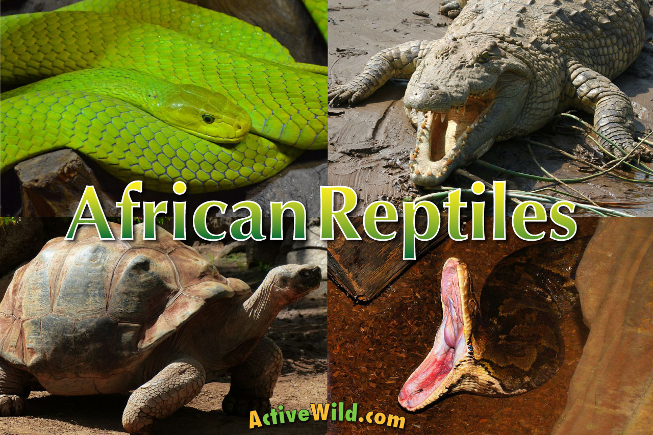 african reptiles list