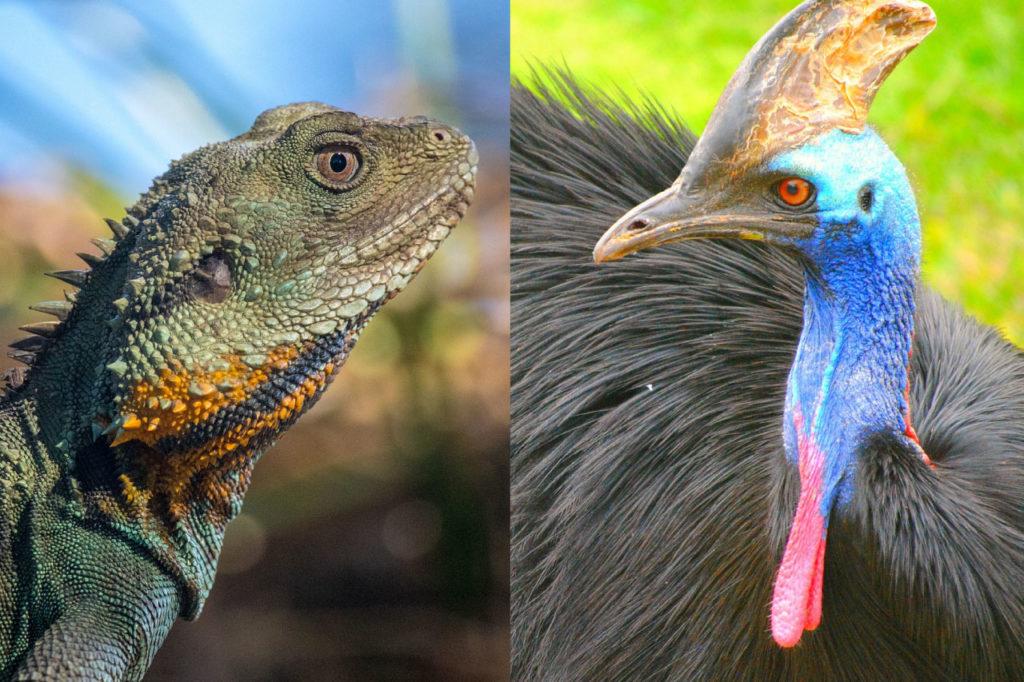 birds are reptiles