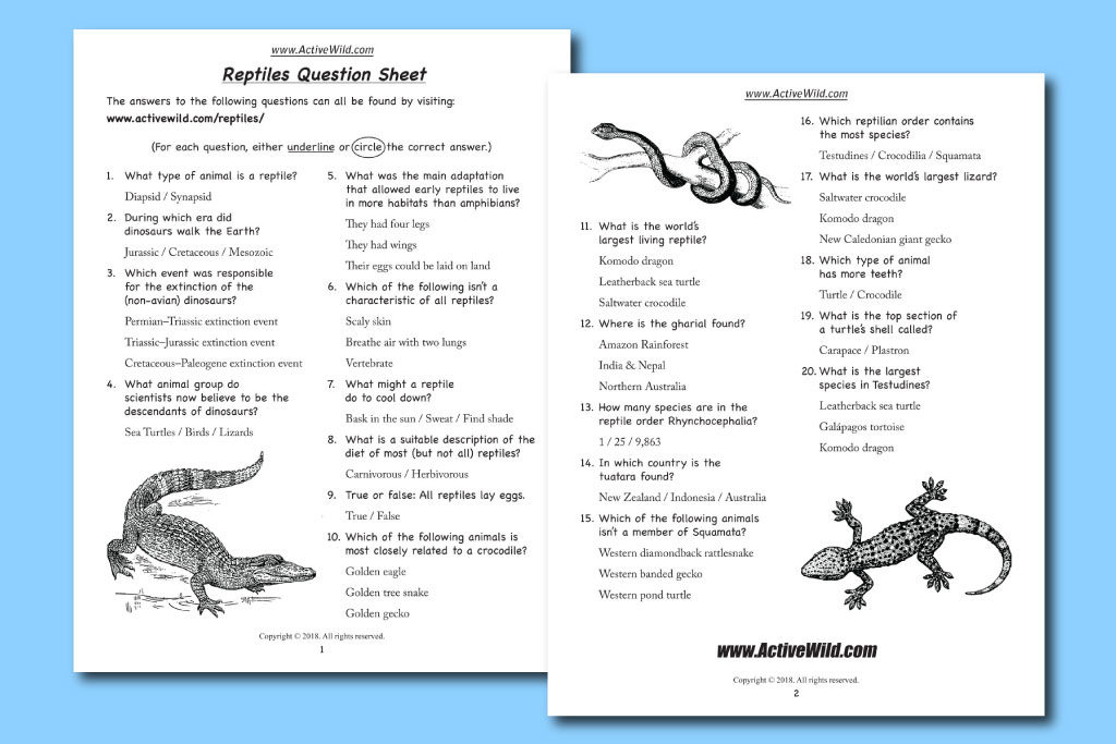 reptiles questions sheet pdf download