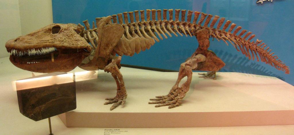 Eryops megacephalus early amphibian