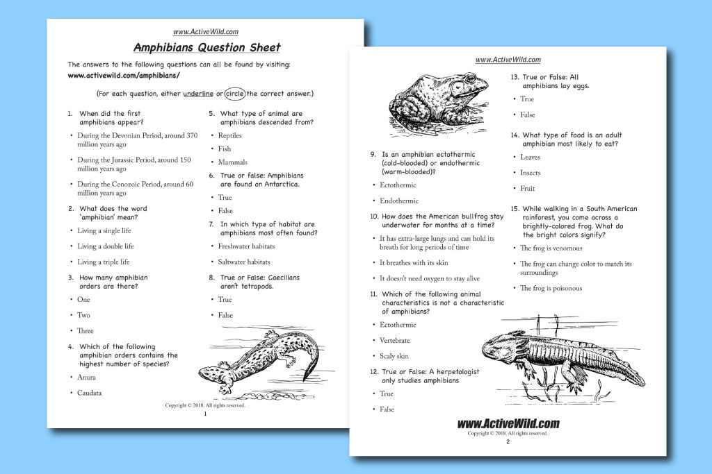 free printable amphibians worksheet