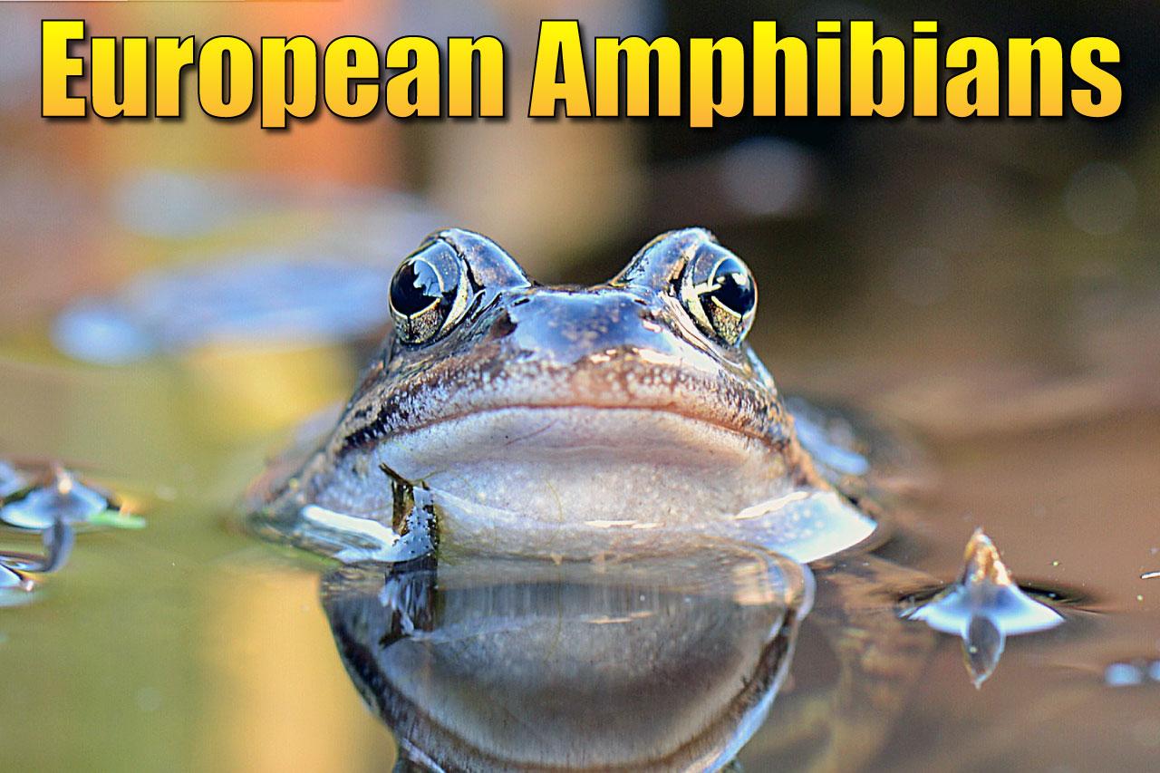 European Amphibians List