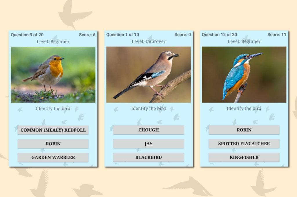 British Bird Quiz Easy Species