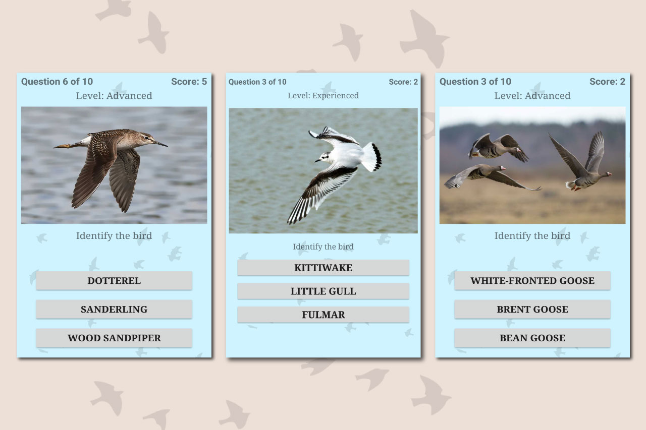 British Birds ID Quiz App by Active Wild: Free Download From Google Play