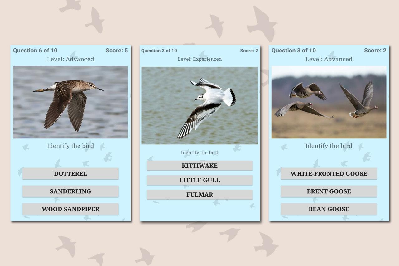 British Birds ID Quiz App by Active Wild: Free Download From