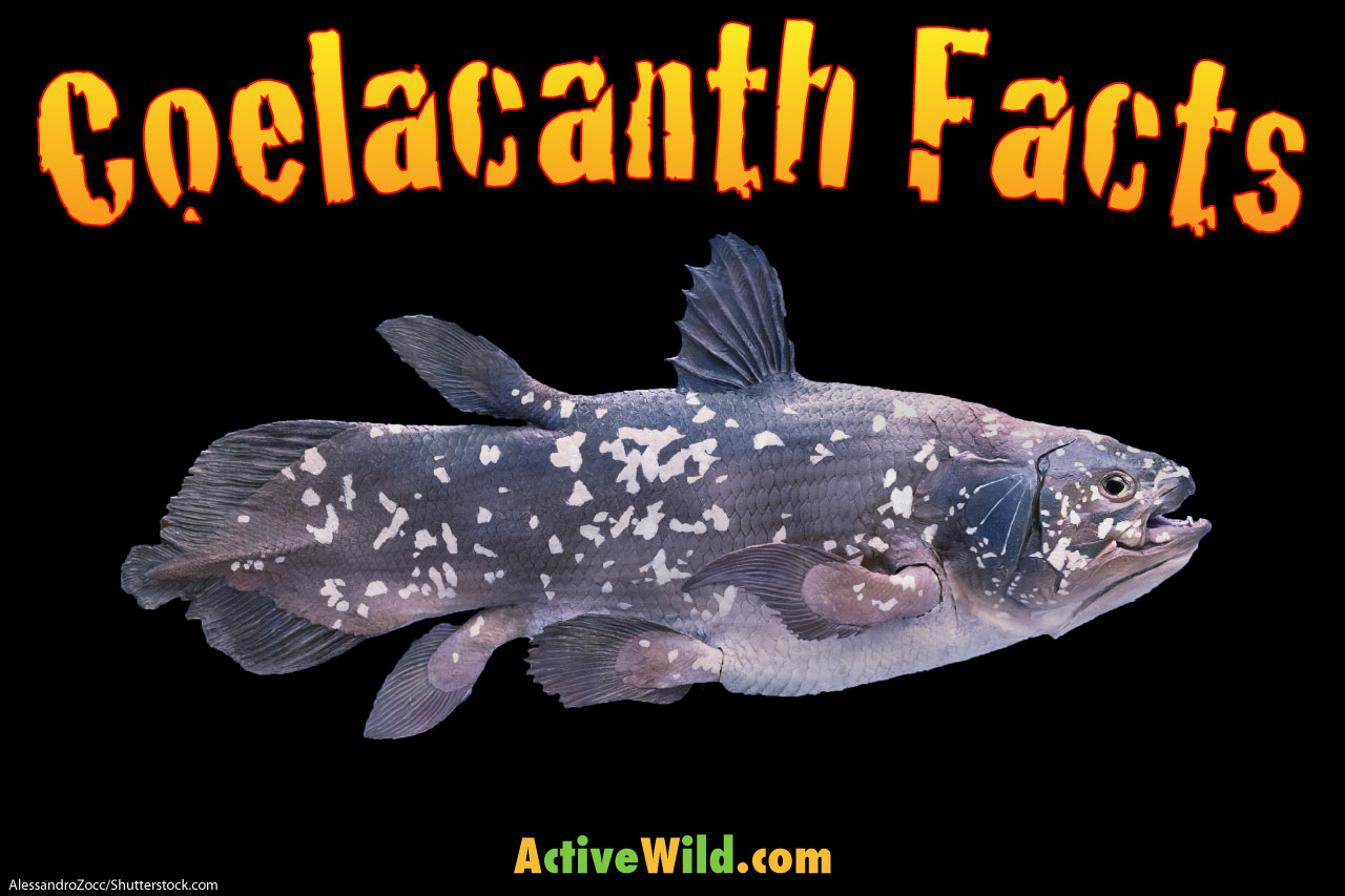 coelacanth facts