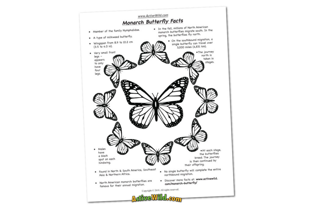 monarch butterfly coloring facts sheet